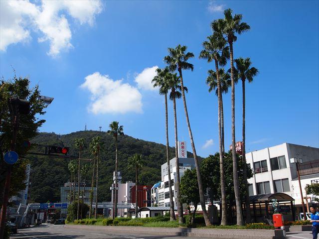 徳島 駅前通り ヤシの木