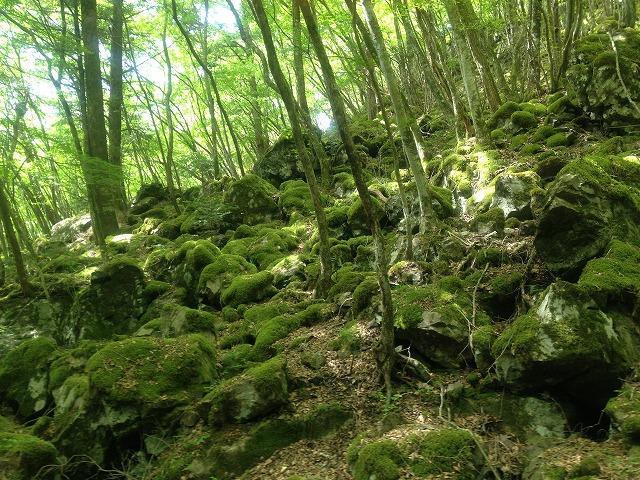 徳島県上勝町山犬嶽の苔