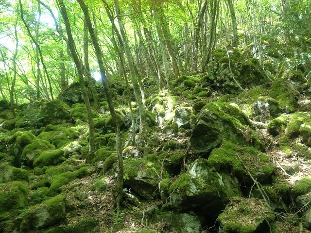 山犬嶽の苔