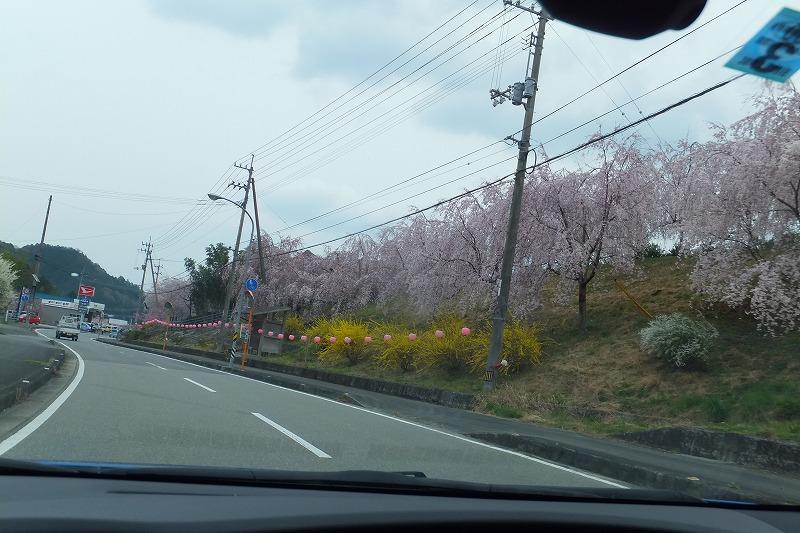 神山町 桜ロード