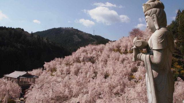 徳島県 桜の名所 ゆうかの里 神山町