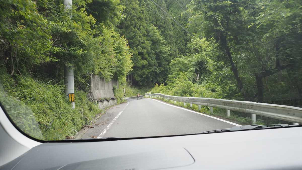 天空の村・かかしの里 徳島県三好市東祖谷菅生(すげおい) ルート 道路画像 シカが出る