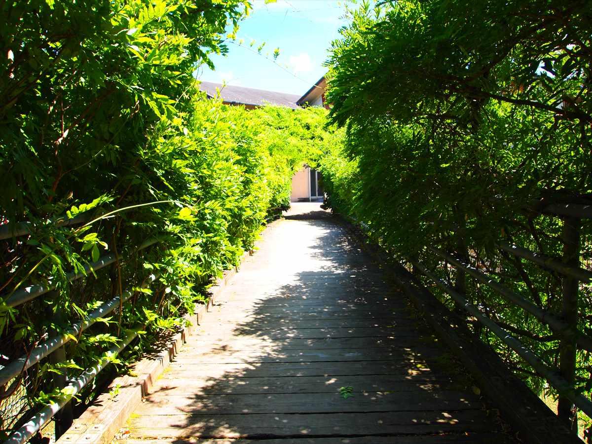 神山温泉 農村ふれあい公園 徳島県神山町 川遊び 吊り橋