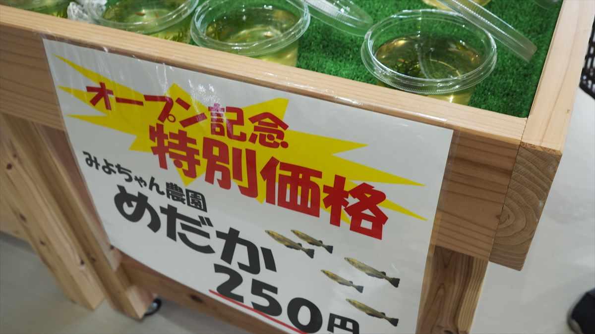 農産物直売所「えがお」 鳴門大津 JA大津松茂 メダカ