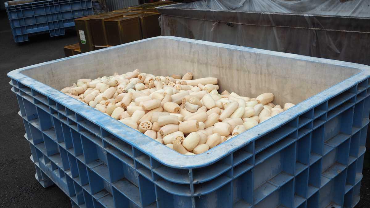 徳島県阿南市新野町 北村食品 レンコン